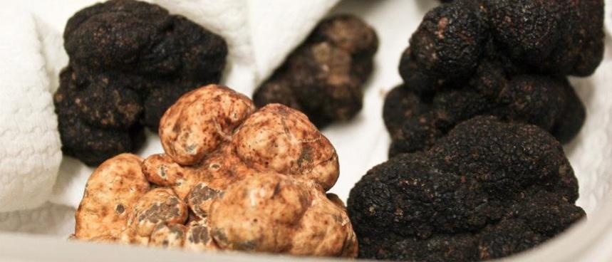 truffles tuscany tuscan truffle hunt