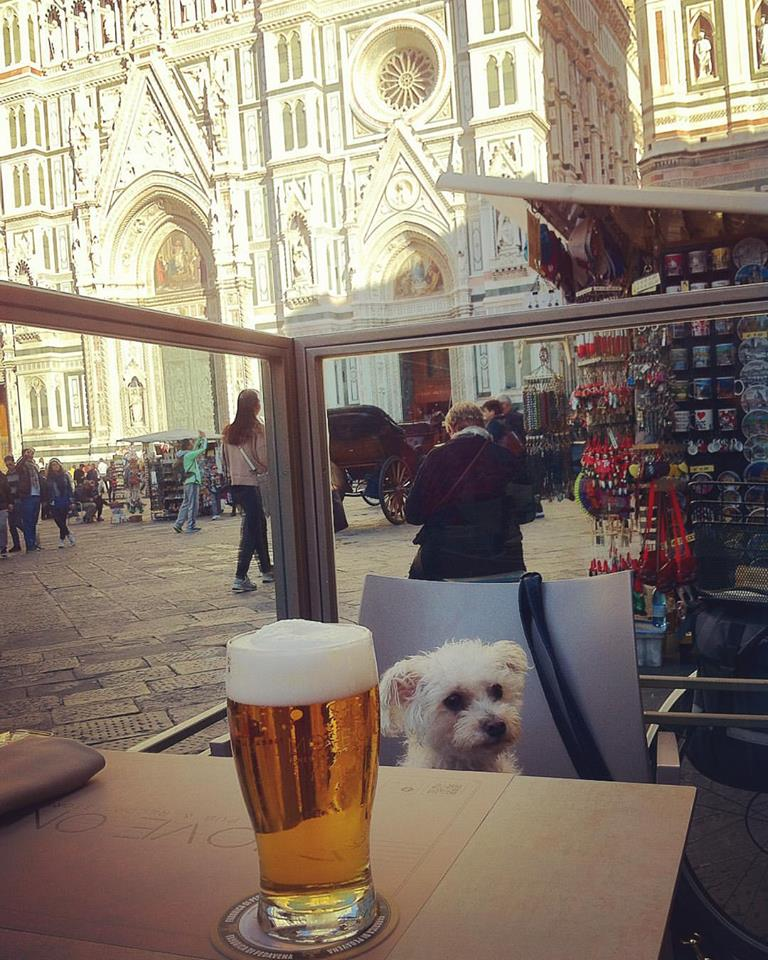 move on dog beer florence