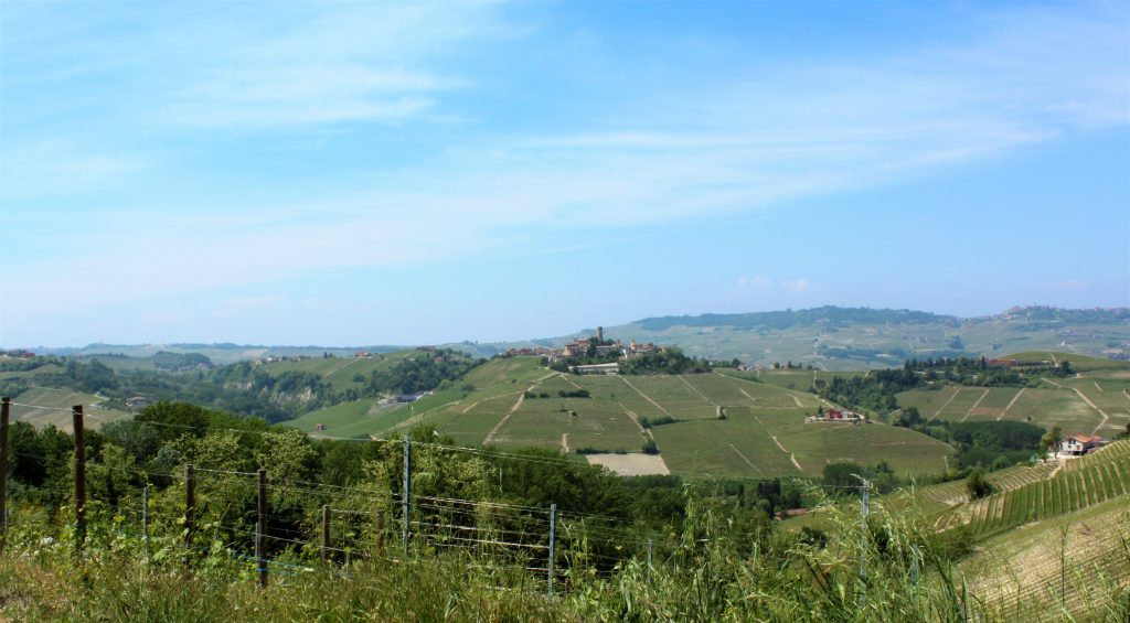 Piedmont wine country via Curious Appetite